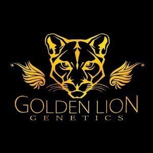 Golden Lion Genetics